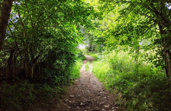 A11 Path