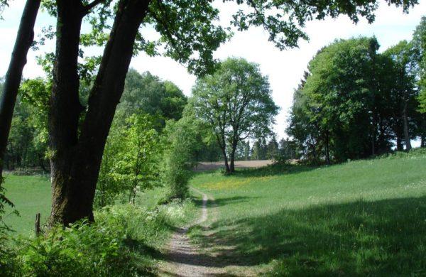Wanderweg Auf Königsfeld