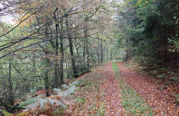 Wappenweg 1